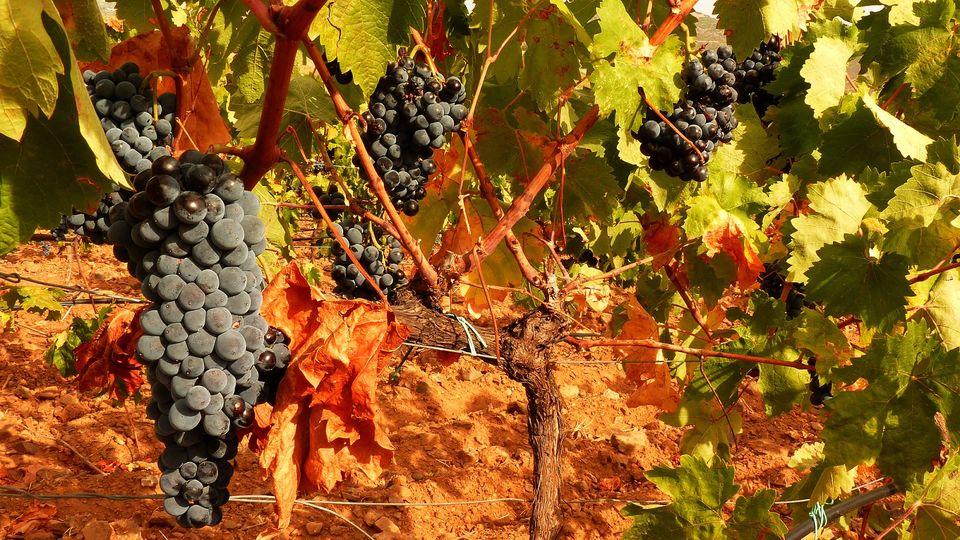 wine-tour-cagliari-sardinia
