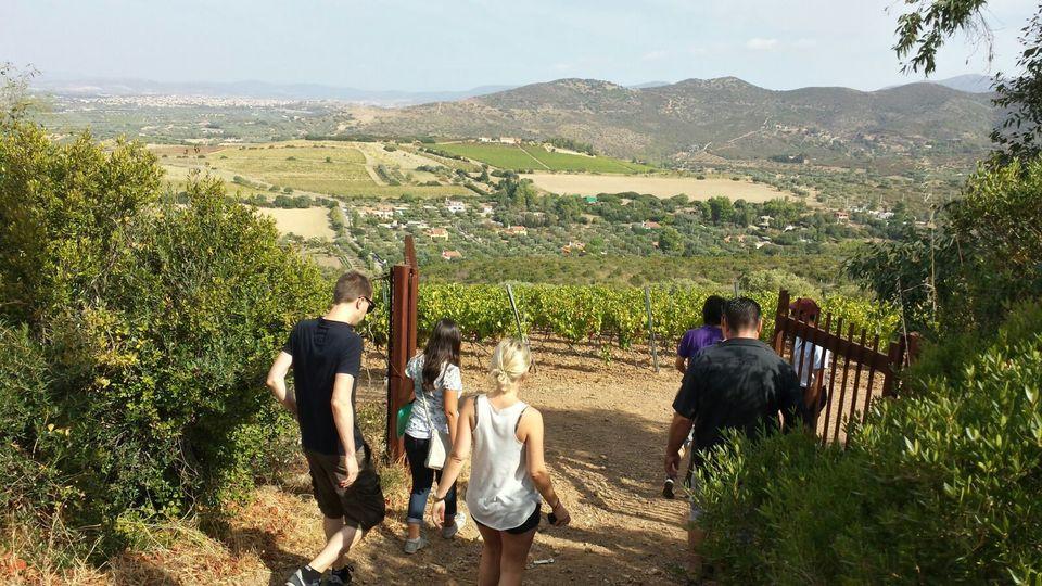wineyards-cagliari