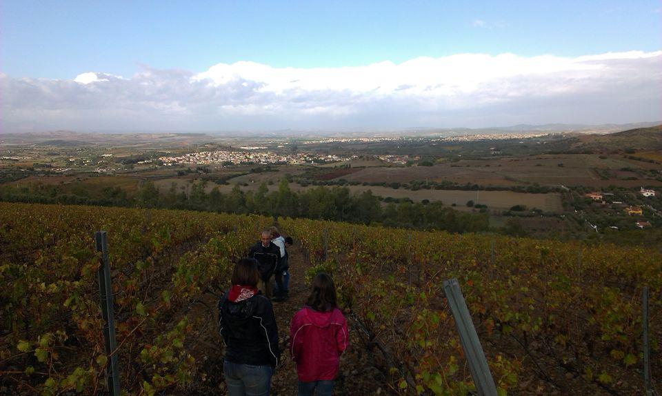 wineyards-sardinia