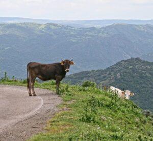 Central Sardinia