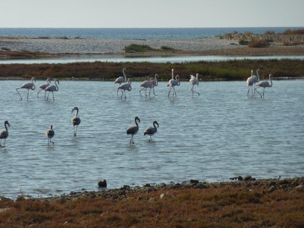 Cabras Pond, Oristano, Sardinia